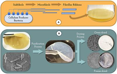 microbial processes applications in supermarket
